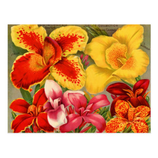 Vintage Seed Packets Cards, Postage and Gifts Postcard