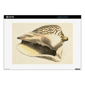 Vintage Sepia Conch Shell Laptop Decals