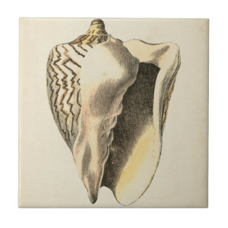 Vintage Sepia Conch Shell Small Square Tile