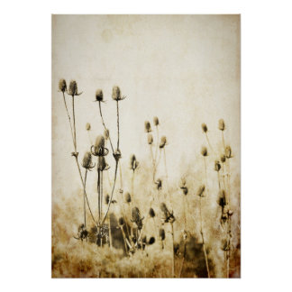Vintage Sepia Coneflowers Poster