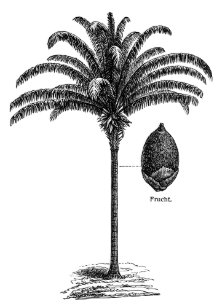 Vintage Palm Tree Gifts On Zazzle