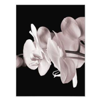 Vintage Sepia White & Cream Dendrobium Orchid Photo Print