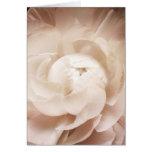 Vintage Sepia White & Cream Ranunculus Background Card