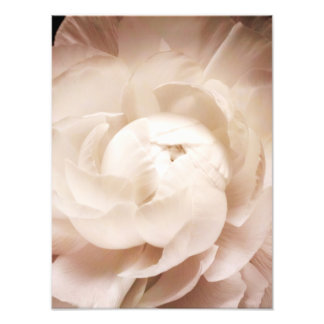 Vintage Sepia White & Cream Ranunculus Background Photo Print