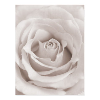 Vintage Sepia White & Cream Rose Background Custom Post Card