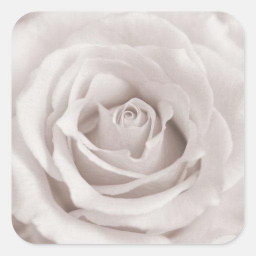 Vintage Sepia White & Cream Rose Background Custom Stickers