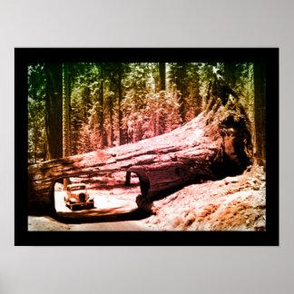 Vintage Sequoia Park Drive Poster