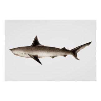 Vintage Shark Illustration - Retro Sharks Template Poster