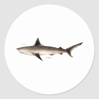 Vintage Shark Illustration - Retro Sharks Template Classic Round Sticker