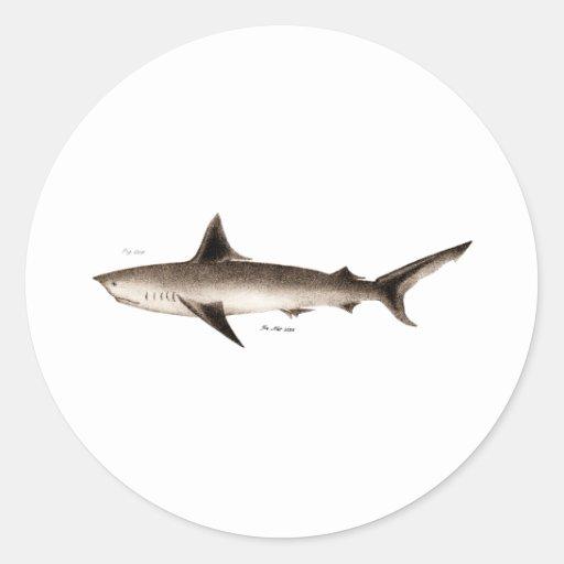 Vintage Shark Illustration - Retro Sharks Template Sticker