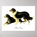 Vintage Sheep Dog Illustration Posters