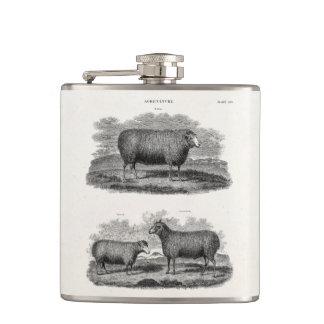 Vintage Sheep Ewe Farm Animals Retro Ewes Hip Flasks