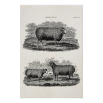 Vintage Sheep Ewe Farm Animals Retro Ewes Poster