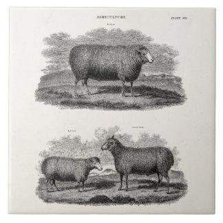 Vintage Sheep Ewe Farm Animals Retro Ewes Tile