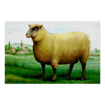 Vintage sheep painting poster