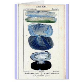 Vintage Shells Card