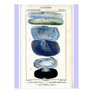 Vintage Shells Post Cards