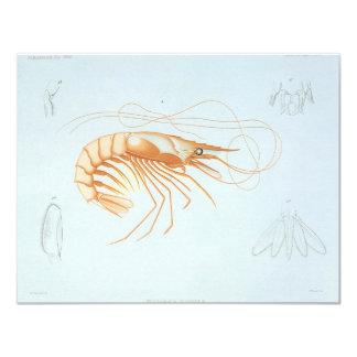 Vintage Shrimp Anatomy, Ocean Animals Invitation