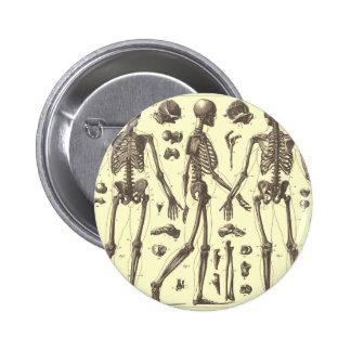 Vintage Skeleton Diagrams Pin