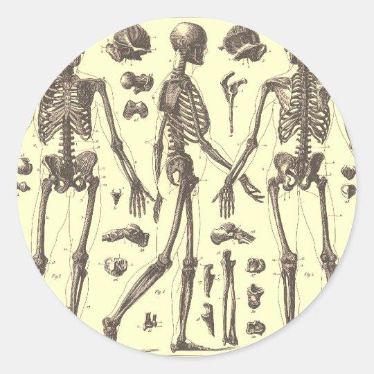 Vintage Skeleton Diagrams Classic Round Sticker