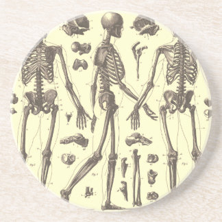 Skull Diagram Gifts on Zazzle