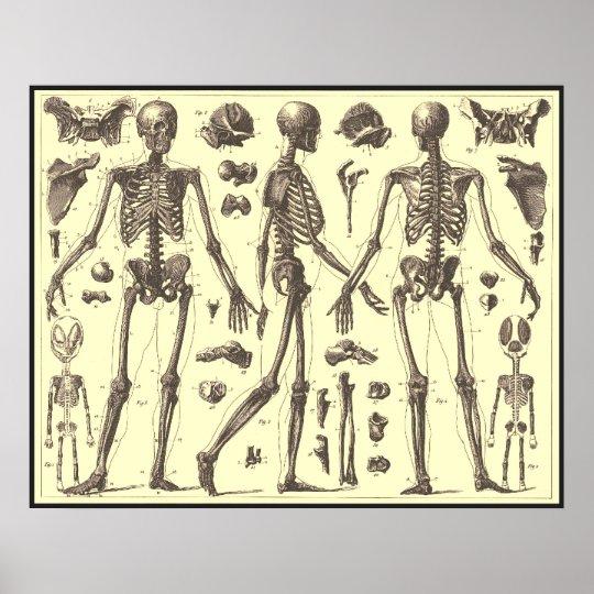 Vintage Skeleton Diagrams Poster