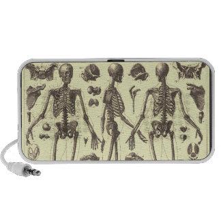 Vintage Skeleton Diagrams Speakers