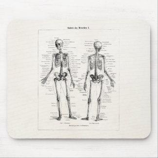 Vintage Skeleton Human Anatomy Bone Bones Skull Mouse Pad