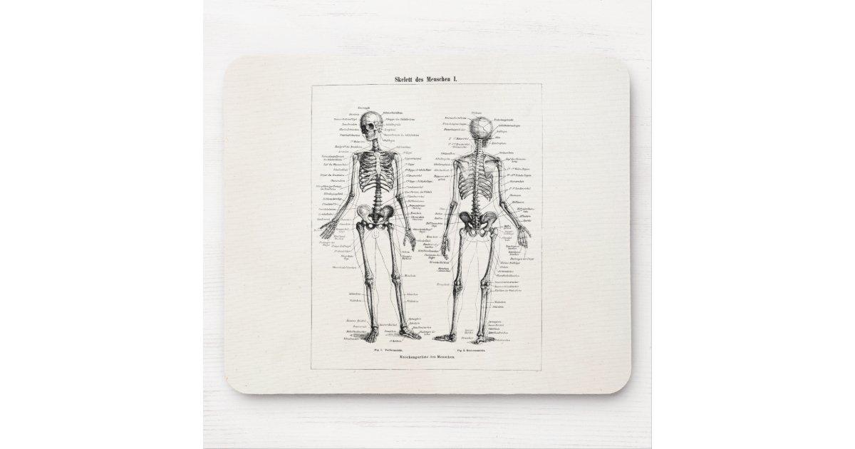 Vintage Skeleton Human Anatomy Bone Bones Skull Mouse Pad Zazzle