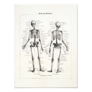 Vintage Skeleton Human Anatomy Bone Bones Skull Photo Print