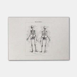 Vintage Skeleton Human Anatomy Bone Bones Skull Post-it® Notes