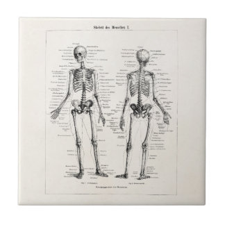 Vintage Skeleton Human Anatomy Bone Bones Skull Tile