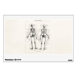Vintage Skeleton Human Anatomy Bone Bones Skull Wall Sticker