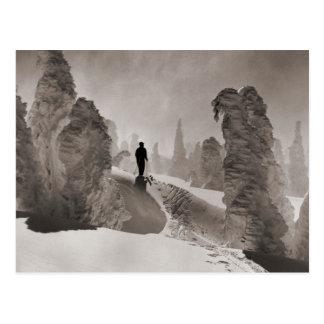 Vintage ski  image, an avenue of trees postcard