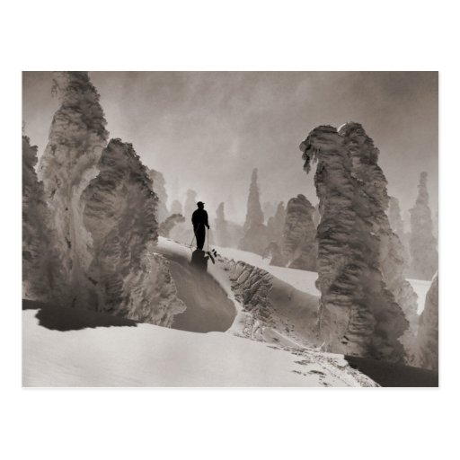 Vintage ski  image, an avenue of trees post card