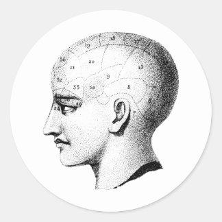 Vintage Skull Anatomy Chart Sticker