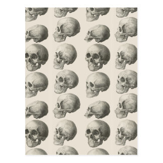 Vintage Skull Illustrations Postcard