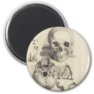Vintage Skulls Magnet