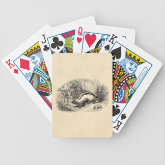 Vintage Skunk 1800s Skunks Illustration Template Bicycle Playing Cards