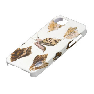 Vintage Snails and Mollusks, Marine Life Organisms iPhone 5 Case