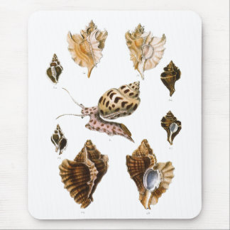 Vintage Snails and Mollusks, Marine Life Organisms Mouse Pad