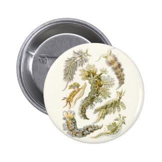 Vintage Snails and Sea Slugs by Ernst Haeckel Button