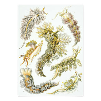 Vintage Snails and Sea Slugs by Ernst Haeckel Card