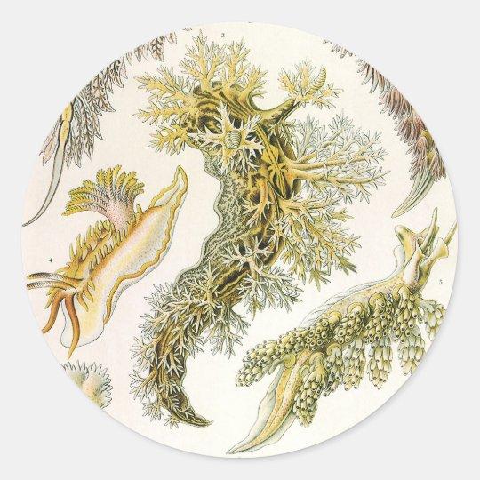 Vintage Snails and Sea Slugs by Ernst Haeckel Classic Round Sticker