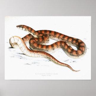 Vintage Snake Drawing-Orange-striped-African Poster