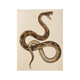 Vintage Snake Illustration Fangs Wood Poster