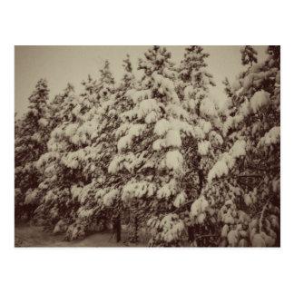 Vintage Snowscape, conífera, CO Tarjeta Postal