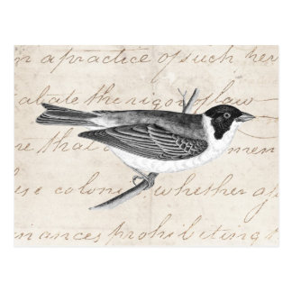 Vintage Song Bird Illustration -1800 s Birds Postcards
