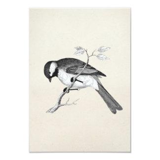 Vintage Song Bird Illustration - 1800's Birds Card