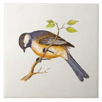 Vintage Song Bird Illustration -1800's Birds Ceramic Tile